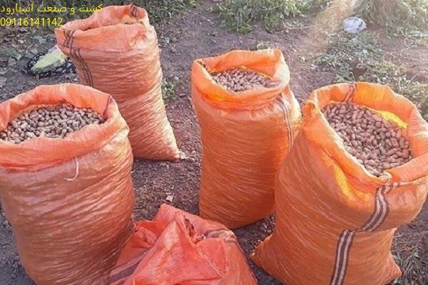 خرید بذر بادام مغان